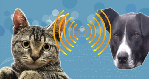 Hearing ability of cats versus dogs