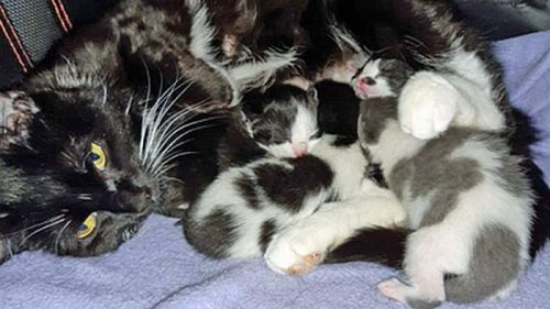 Hope and her kittens