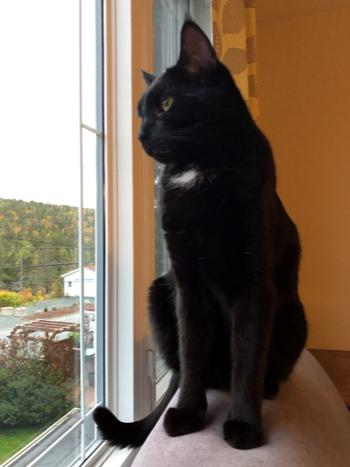 heroic black cat