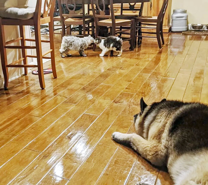 Liam and Amber nose touch greeting in front of friendly and interested dog