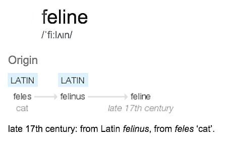 Origin of word feline