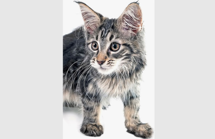 Super shaggy cat