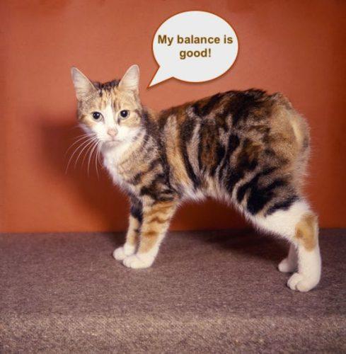 Tailless cat with good balance