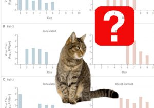 Transmission of Covid-19 between domestic cats