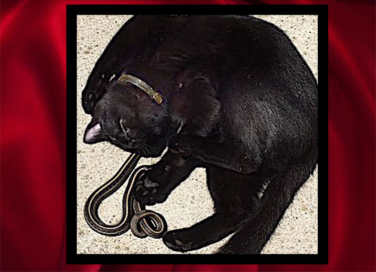 Unimaginable friendship between black cat and black snake