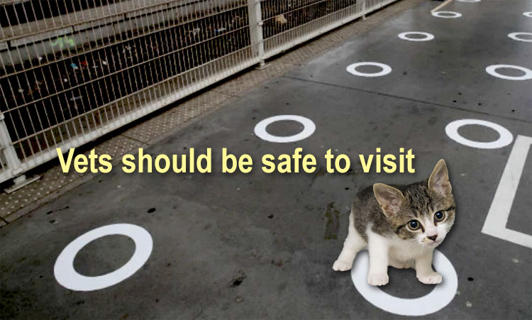 Veterinary clinics should be safe to visit