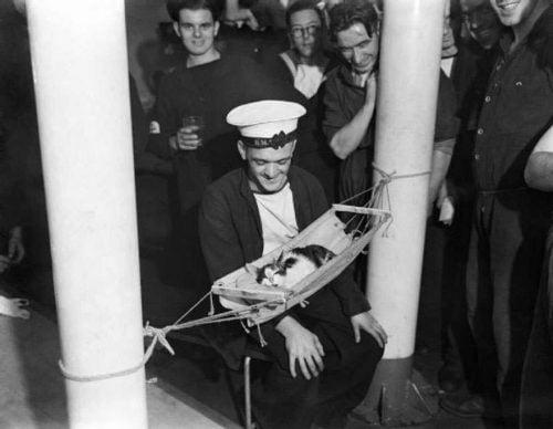 WW2 ship's cat