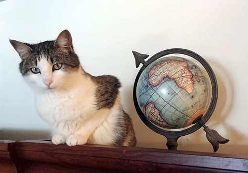 lost cat found