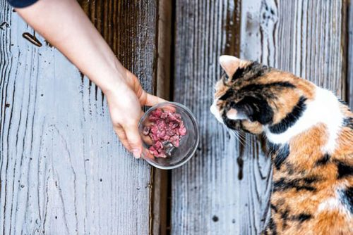 Feeding feral cats during coronavirus lockdowns is essential