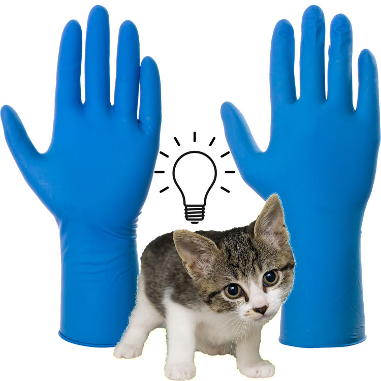 Disposable gloves a potential hazard to domestic cats