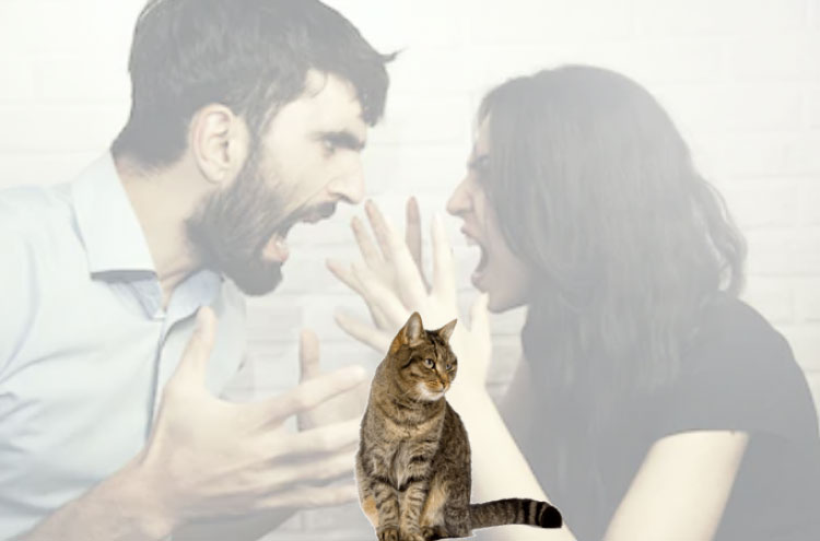 She hates her boyfriend's cat because the gets inbetween her and him