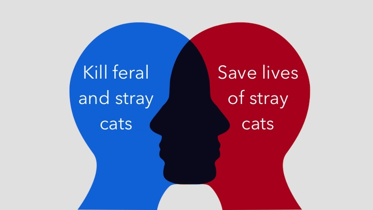 Aussie are confused over how to deal with stray and feral cats