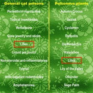 Top ten most poisonous plants