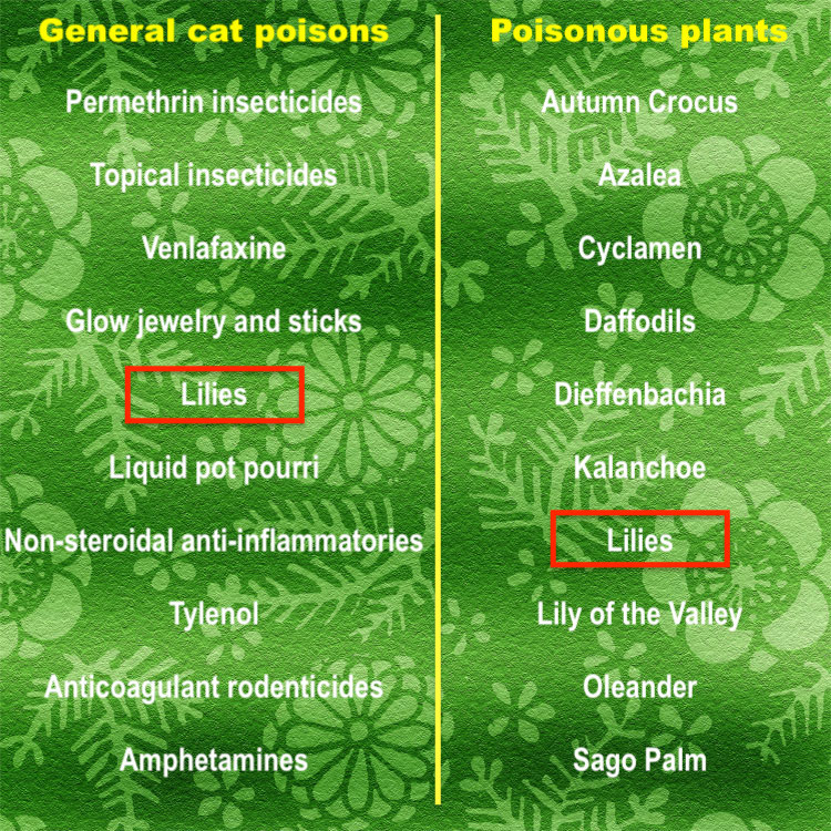 Top ten most poisonous plants