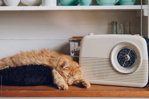 Cat listens to radio