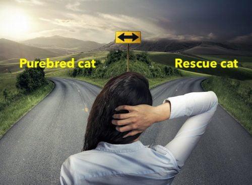 Are purebred cats worth it
