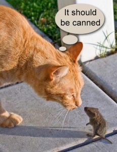 Canned mouse or vole would be ideal cat food