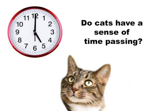 Do cats have a sense of time passing?