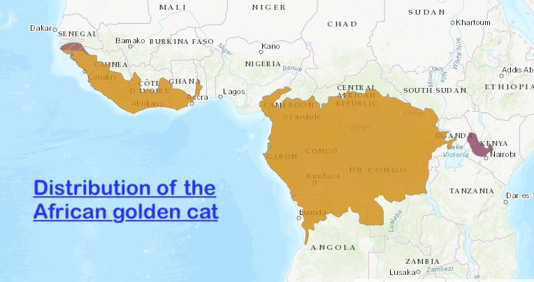 Distribution of African golden cat