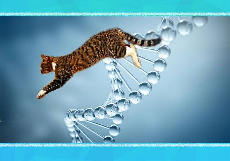 Feline hunting is in their DNA