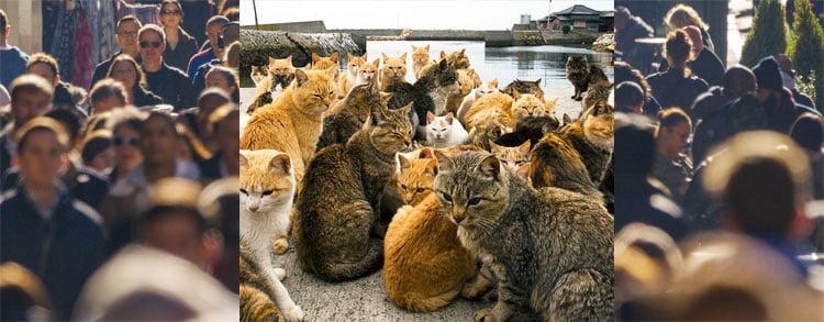 Human versus cat population