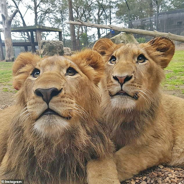 Ariel and Juda the lions who attacked Brown