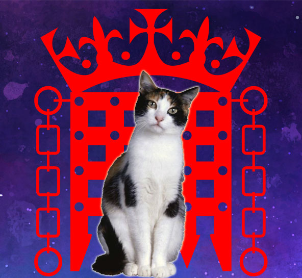 All-Party Parliamentary group on cats