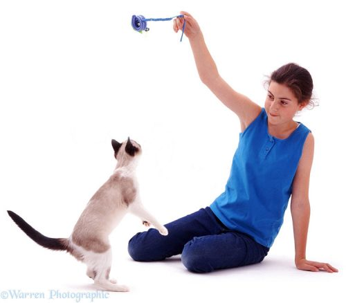 Playing with a cat helps make them less fearful in a poor environment