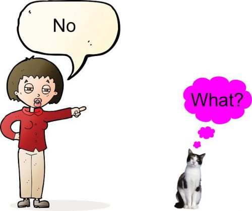 Saying No to a cat does no work as expected or as desired