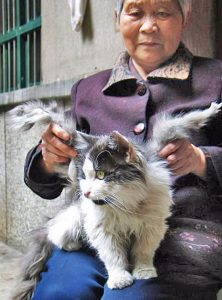 Winged cat in China