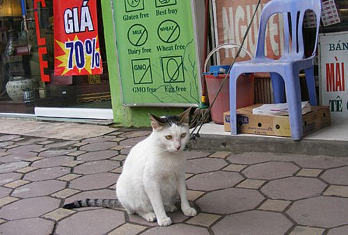 Cat on leash in Vietnam