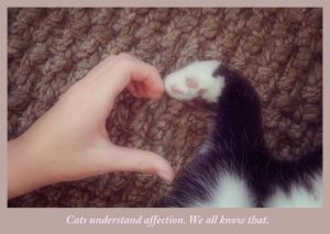 "Do cats understand ""I love you"""