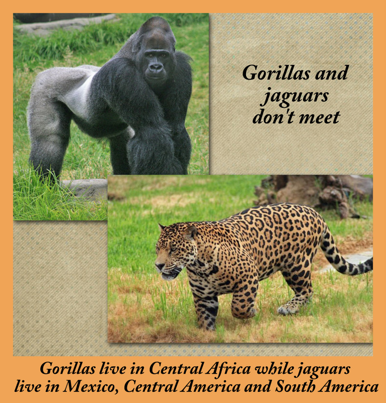 Gorilla and Jaguar
