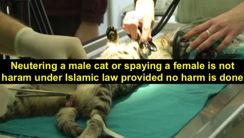 Desexing cats is not haram