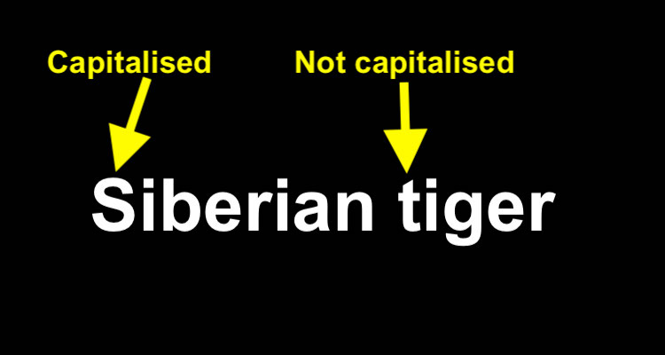 "Is ""tiger"" capitalised?"