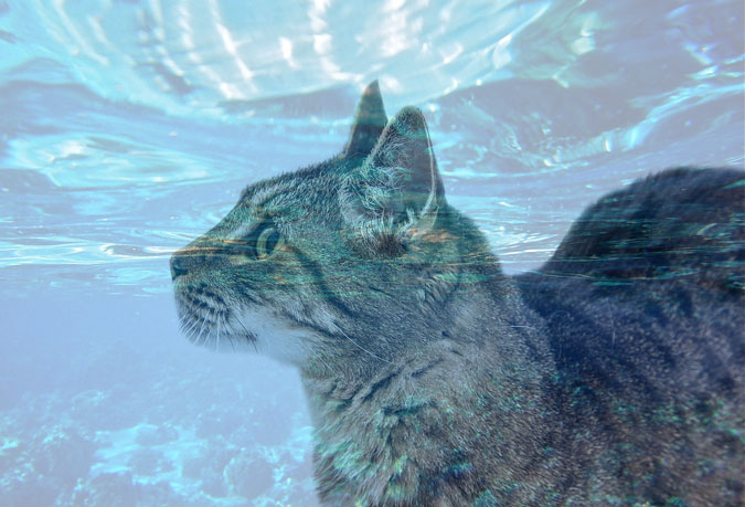 Water and cats