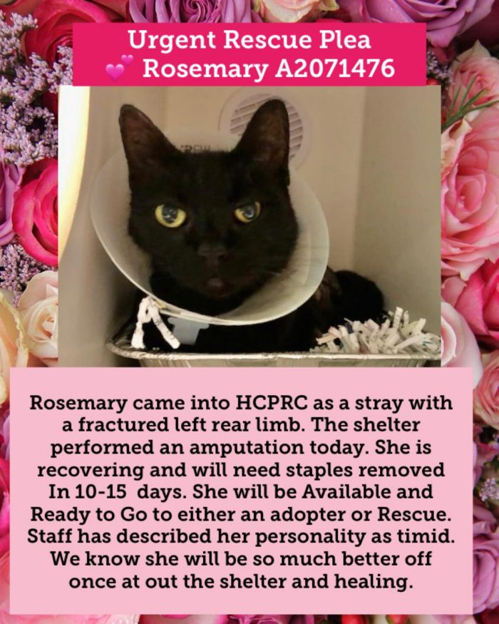 Rosemary needs to be adopted urgently