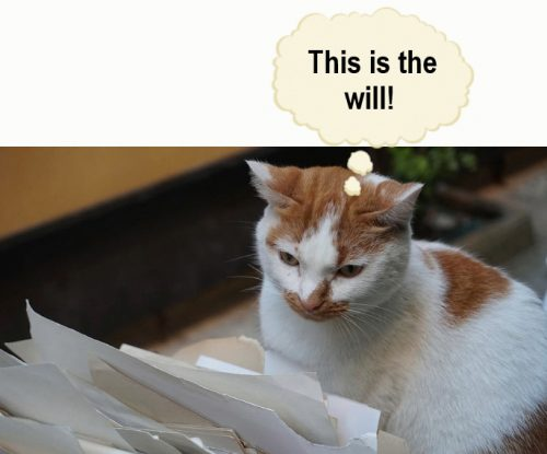 Cat finds a lost will stored by a lawyer