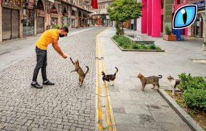 Cats in social distancing queue