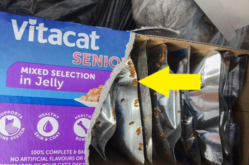 Commercaially manufactured cat food infested with flies