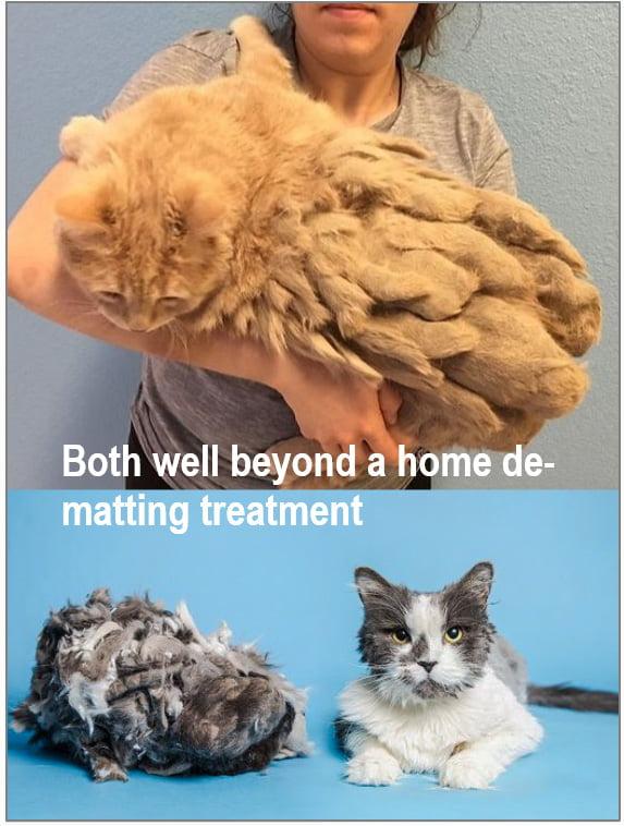 De-matting a cat