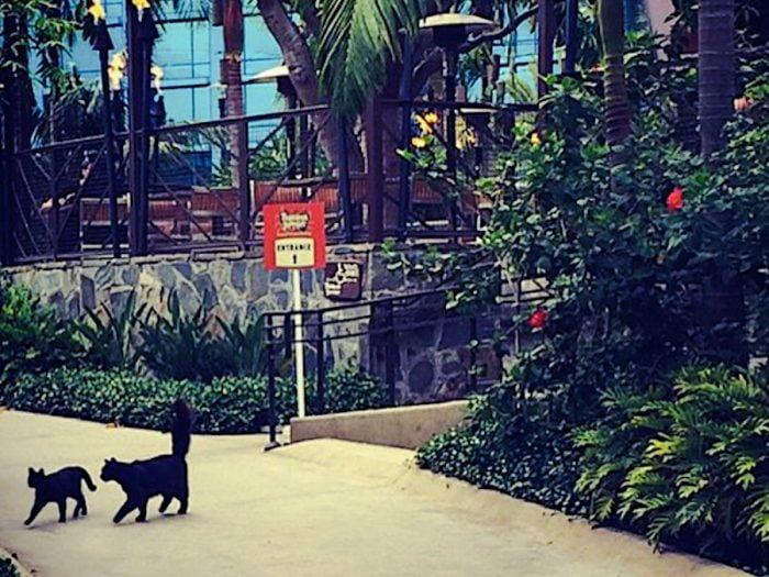 Disneyland's feral cats