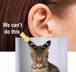 Human vestigial ear flap movements