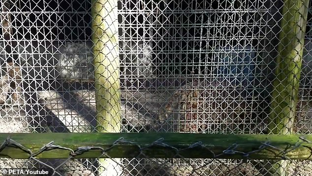 The disgusting concrete and steel cage in which Lila lives and has lived for many years.