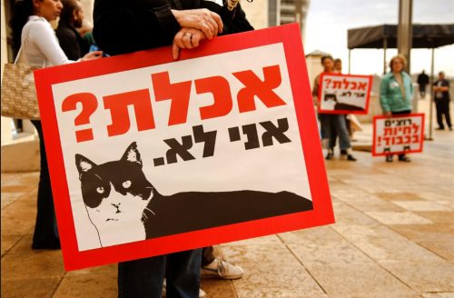 Protest concerning the cats of Israel
