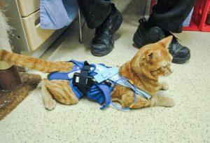 VA cat experiments
