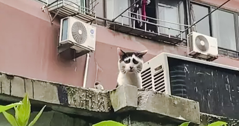 Worried stray cat in China