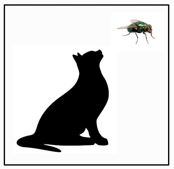 Cat and fly