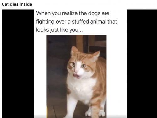 Cat dies inside