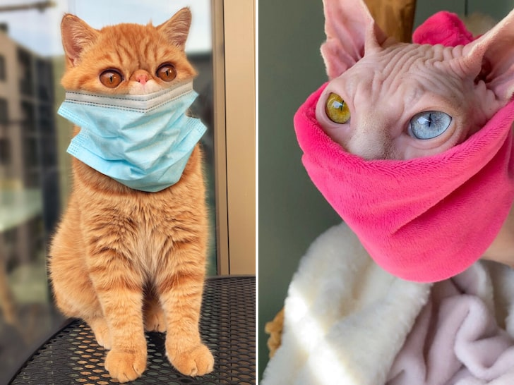 Cats wearing face coverings